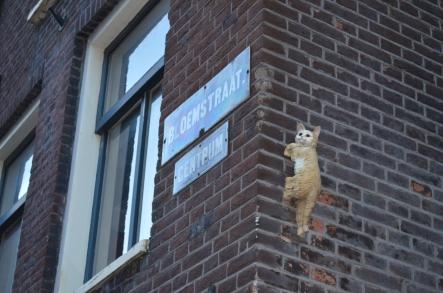 Kitten of Bloemstraat